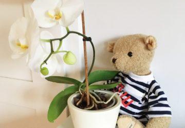 Bezpieczna roślina doniczkowa do pokoju dziecka - storczyk