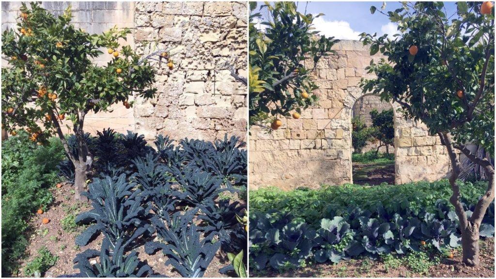 Ogród przy Pallazzo Parisio