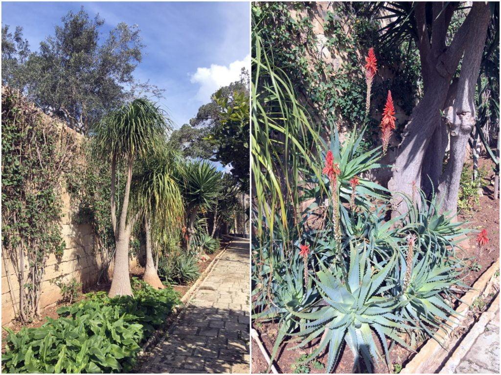Rośliny w Palazzo Parisio w Naxar na Malcie