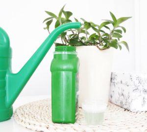 Nawożenie roślin pokojowych
