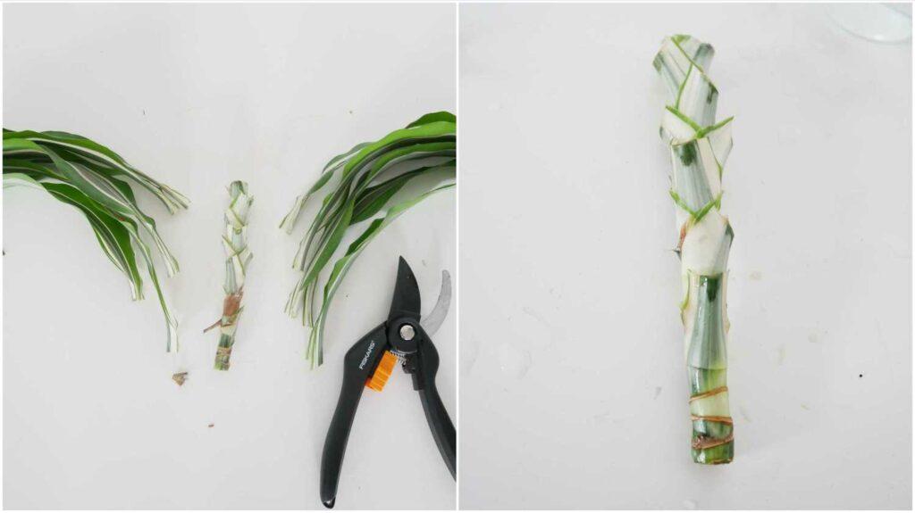 Rozmnażanie draceny wonnej -  usuwanie liści z sadzonki pędowej.