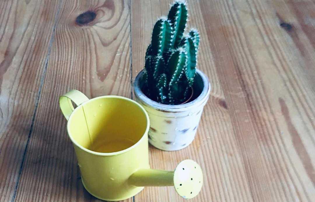 Miniaturowa konewka z kaktusem rosnacym w malutkiej doniczce.
