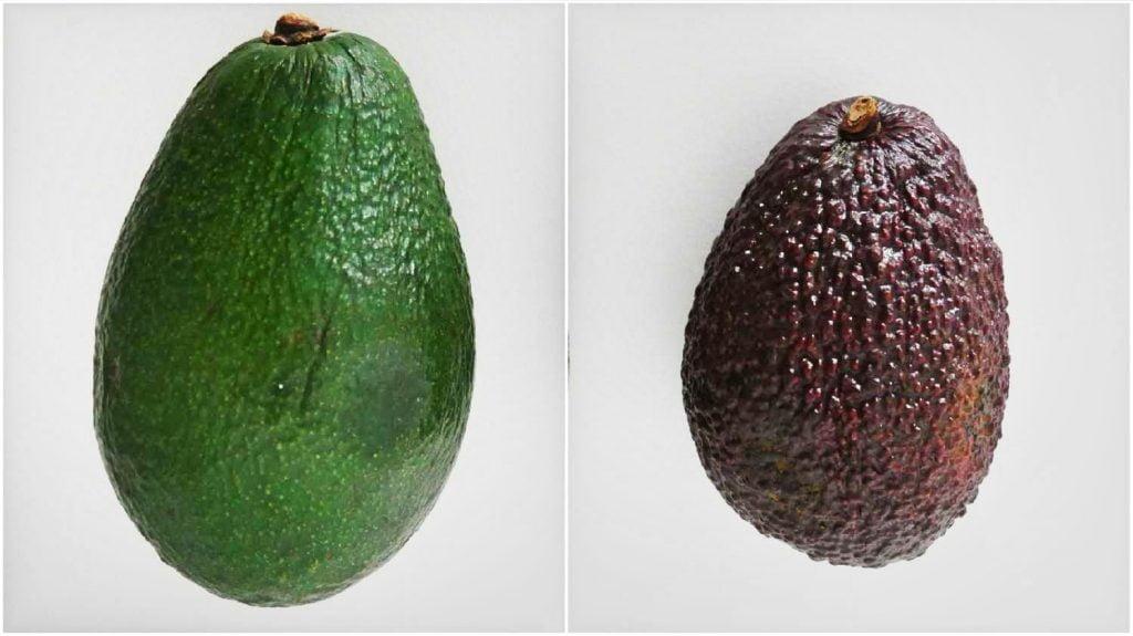Porównanie dwóch najbardziej popularnych odmian awokado. Po lewej odmiana Fuerte, a po prawej odmiana Hass.